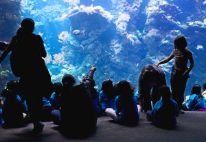 kids-watching-aquarium-1113tm-pic-632